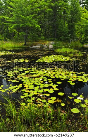 Lily pads and water lilies on lake surface in Northern Ontario wilderness