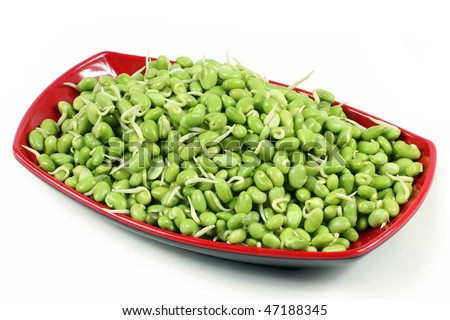 lima bean on white background