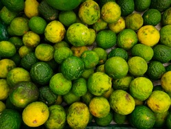 Lime (Citrus amblycarpa), a fruit used for cooking spices, reduces the fishy odor.