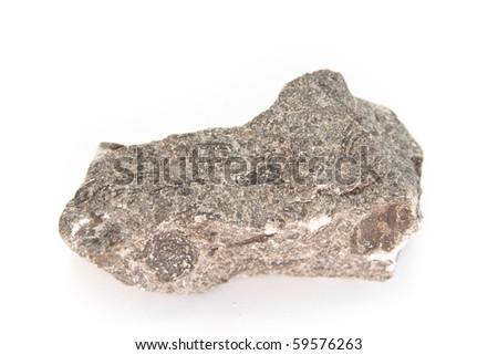 Limestone,  a sedimentary rock with Nummulites from paleogene, neogene