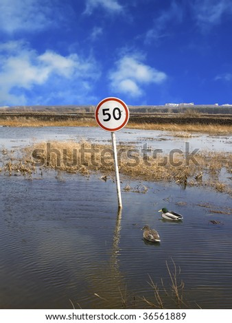 Limit of speed for wild ducks on a flooded road