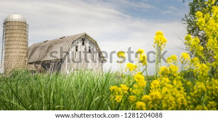 Limited depth of field photo with rustic barn resting in a field of grass.  Motion filled yellow flowers add a pop of color to this dreamlike scene.