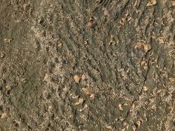 limpet shells, barnacle shells and many seashells on rock surface at beach close up