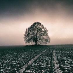 Linden tree at cold foggy sunset
