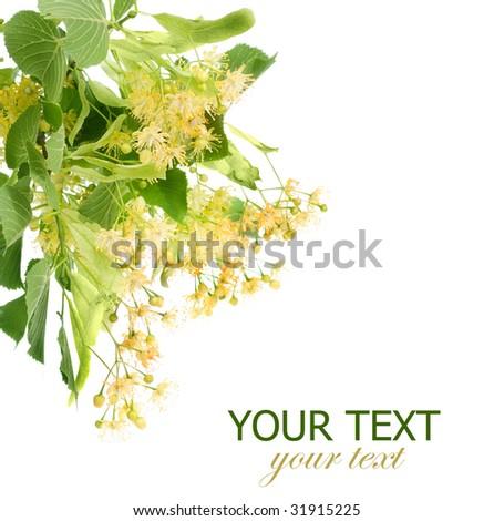 Linden Tree Flowers Border