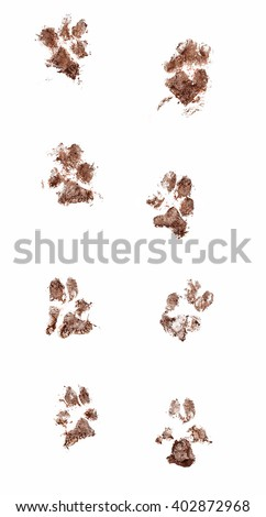 Line of dirty dog paw prints made with real mud. Isolated on white background