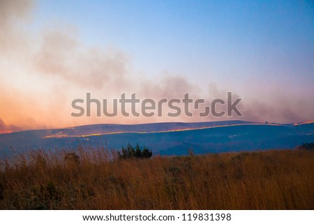 Line of fire in brush from an African wildifre