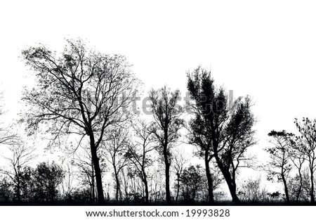 line of trees, silhouetted against a bright sky