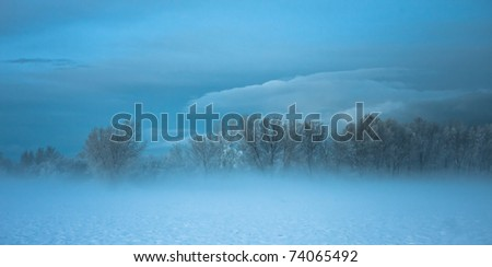 Line of Trees surrounded by Mist and Clouds
