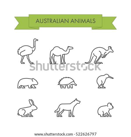 Line set of australian animals. Linear icon dingo, koala, kangaroo, echidna and kiwi.