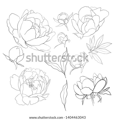 linear graphic image of peonies for decoration, patterns and printing, wedding invitations