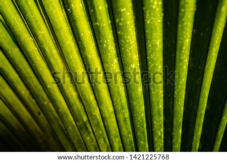 Lines and textures of Green leaves ,Green fresh plants grass closeup for background ,closeup nature view of green leaf
