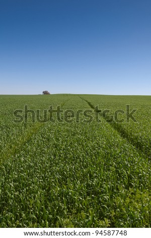 Lines converging in a green wheat field