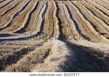 Lines, Straw, field.