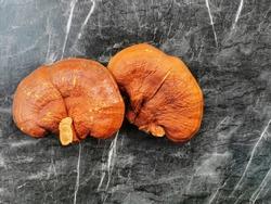 Lingzhi mushroom or Reishi mushroom Ganoderma lucidum (Curtis) P. Karst , Ganoderma lucidum on  black ground
