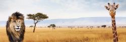 Lion and giraffe closeup over Kenya, Africa scene. Sized for website or social media header