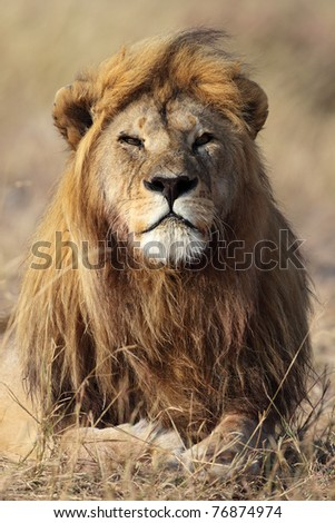 Lion cub portrait, Serengeti National Park, Tanzania, East Africa