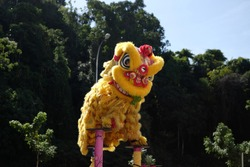 Lion dance show in chinese new year festival