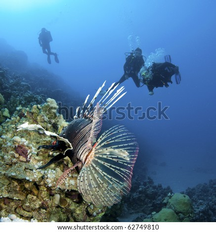 Lion fish with scuba divers in background - stock photo
