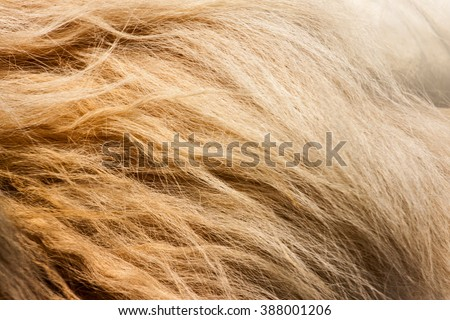 lion fur background texture image background