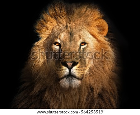 Shutterstock Lion king isolated on black