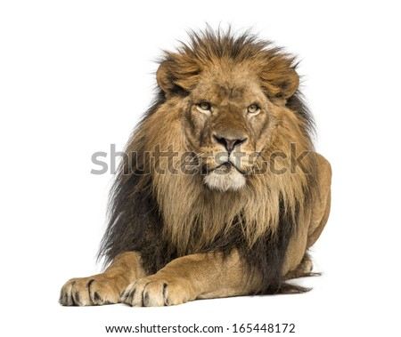 Lion lying down facing Panthera Leo 10 years old isolated on white