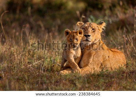 Lion mother of Notches Rongai Pride with cub in Masai Mara, Kenya #238384645