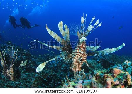 Lionfish and scuba divers #610109507