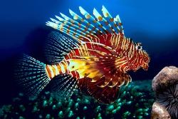 Lionfish, Siam bay. Province Trat. Koh Chang island. Thailand