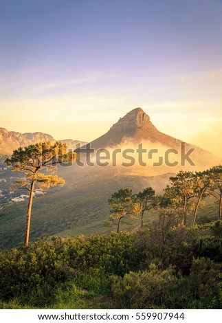 Lions Head Mountain in Cape Town, South Africa #559907944