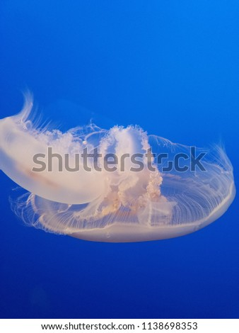 Stock Photo Liquid tranquility in blue