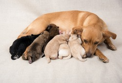 Litter of Small Breed Puppies
