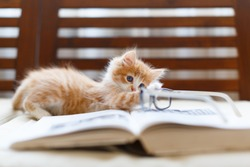Little adorable sunny fluffy cute ginger cat with blue eyes playing with glasses lying on the book, side view/active kitty, selective focus on cat, handsome tabby kitten, domestic animals concept.