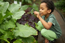 little african american kid boy look at plant using magnifier, want to know about nature everything, learn gardening and plants, flowers