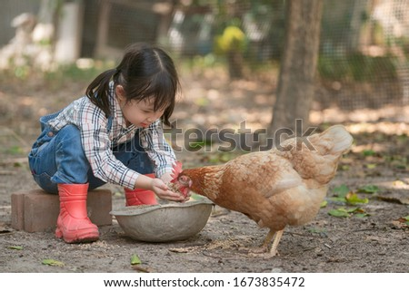 Little asian girl feeding hen happily and enjoy in the chicken farm. First learning of little children. Happy family concept.