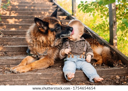 Little baby boy sitting on a wooden ladder with a dog of the German Shepherd breed on nature. the dog licks the boy's face. Photo in warm brown tones. summer. the sun. selective focus Foto stock ©