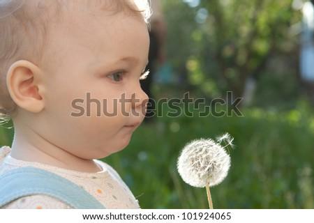 Little baby girl blowing on dandelion. Sunlight effect