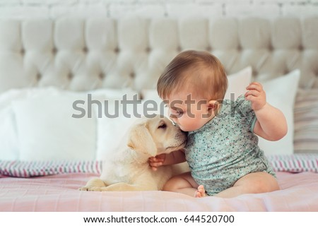 f8cab9f1aa Little baby girl sit on the bed with labrador puppy  644520700