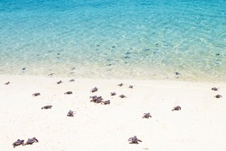 Little baby turtles on their way to the sea