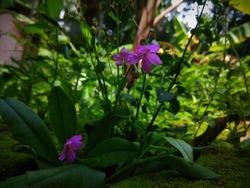 Little beautilful purple flower