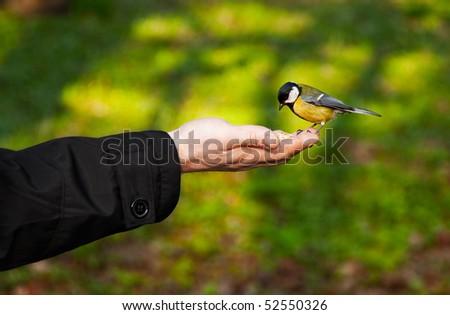 little bird sitting on hand