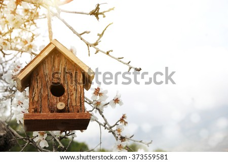 Little Birdhouse in Spring with blossom almond flower