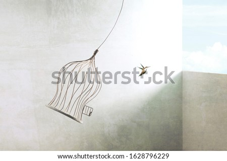 little birds escapes out of birdcage Foto stock ©