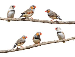 Little birds on branch isolated on white background