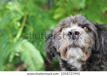 little black and white dog posing for close up photos with a leafy green background #1058725943