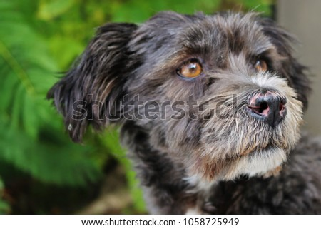 little black and white dog posing for close up photos with a leafy green background #1058725949