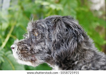 little black and white dog posing for close up photos with a leafy green background #1058725955