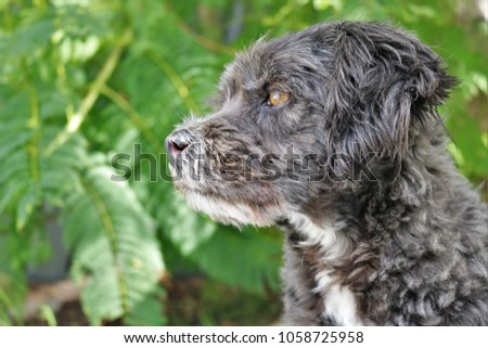 little black and white dog posing for close up photos with a leafy green background #1058725958