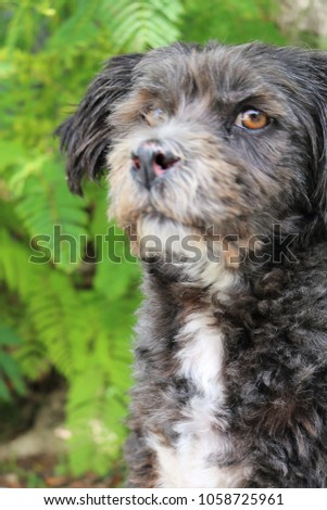 little black and white dog posing for close up photos with a leafy green background #1058725961