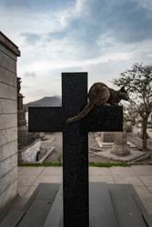 Little black cat sitting on a cross inside the cemetery